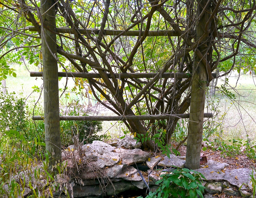 Vines can add many benefits to your landscape. Shade, beauty, organic matter to the soil, habitat, food etc.