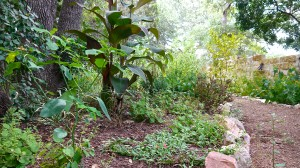 Newly installed, diverse ornamental garden.