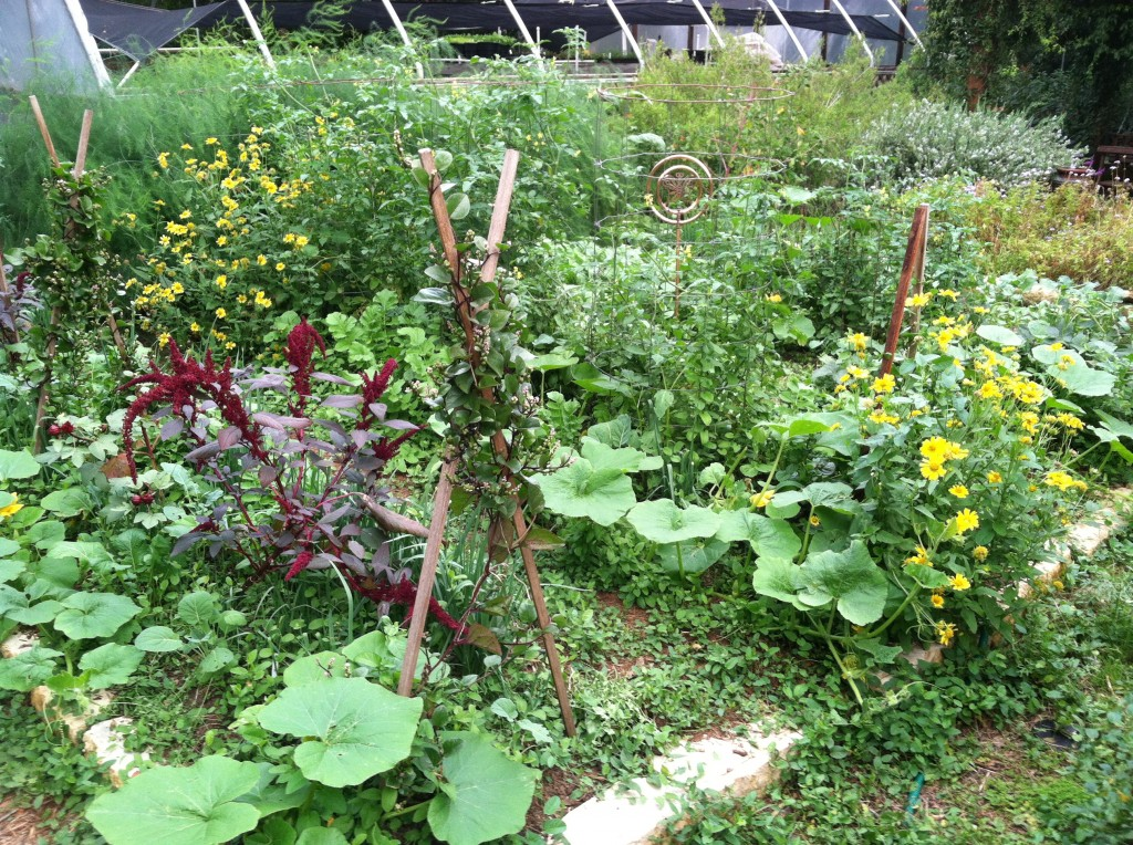 Vegetable, hummingbird and butterfly garden in late summer.